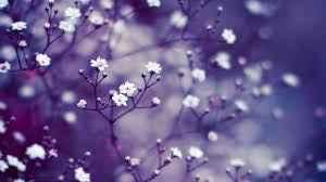 flower wallpaper 2